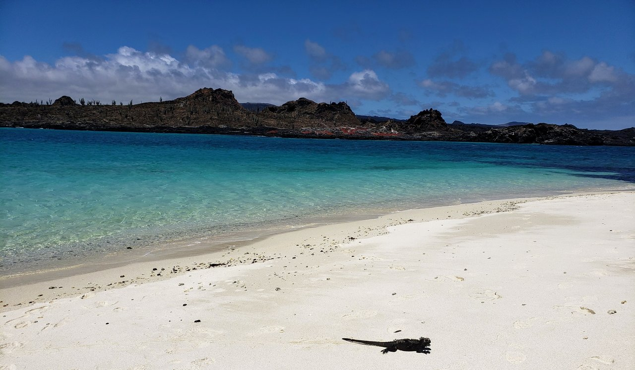 Quintessential Galapagos scene, can you believe how beautiful that water is?!?! | Photo taken by Peter S