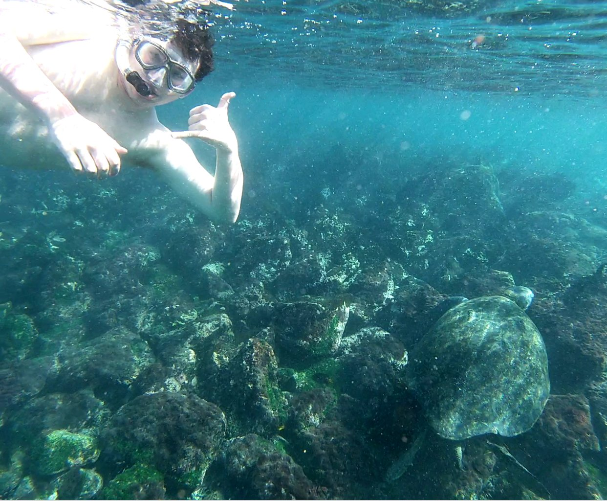 Our first turtle sighting, so exciting! | Photo taken by Peter S