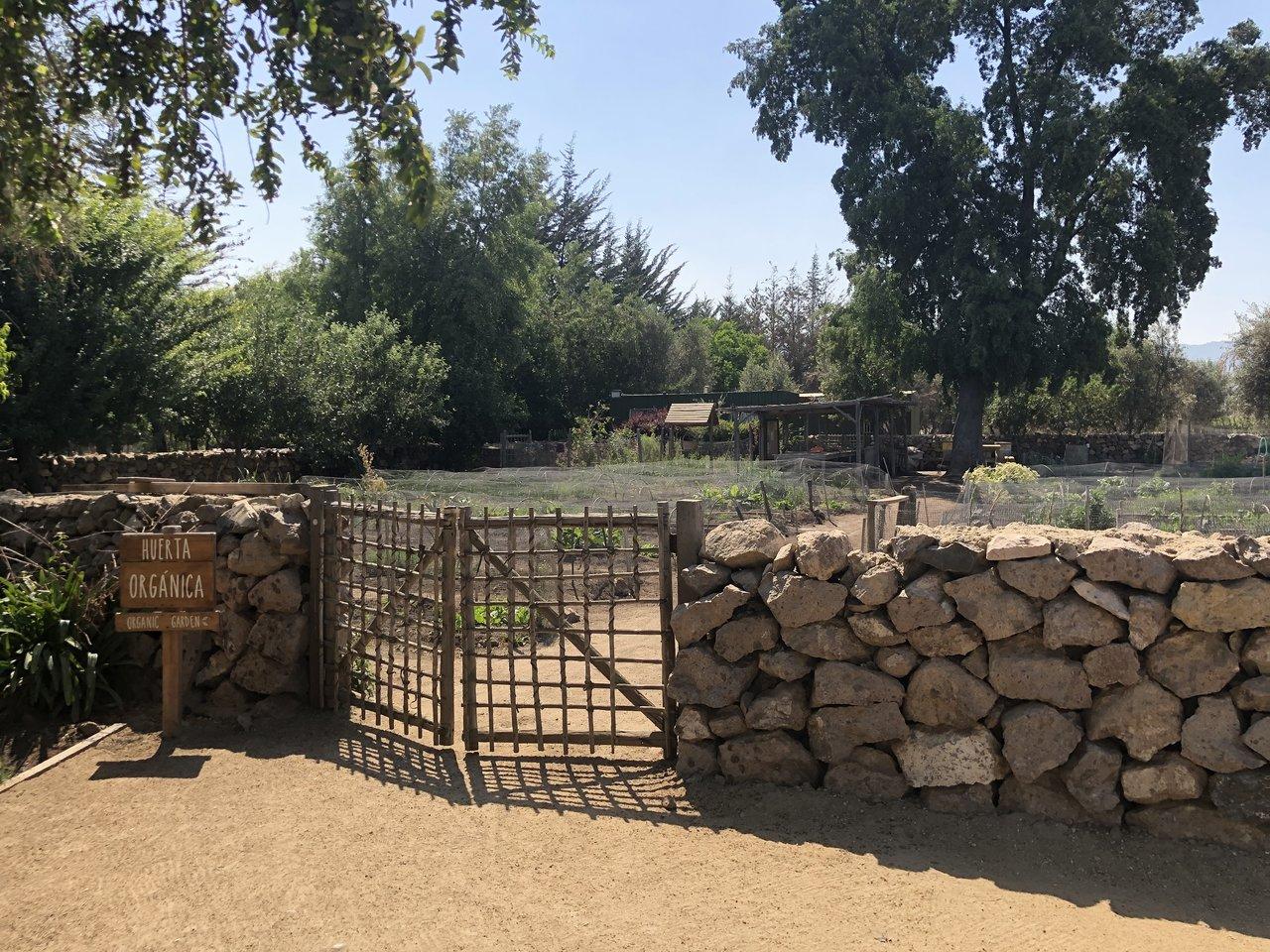 Organic Garden at Emiliana | Photo taken by Melody B