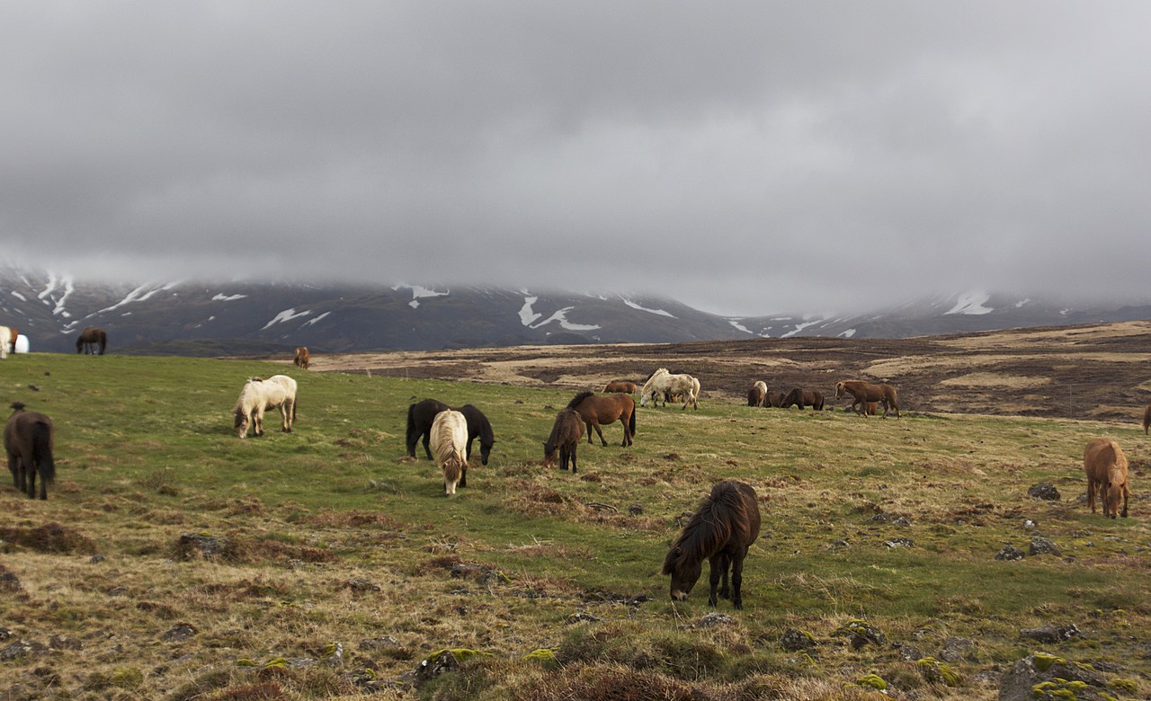 Island Horses   Photo taken by Kim C
