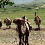 Camel in the Gobi | Photo taken by Trina N