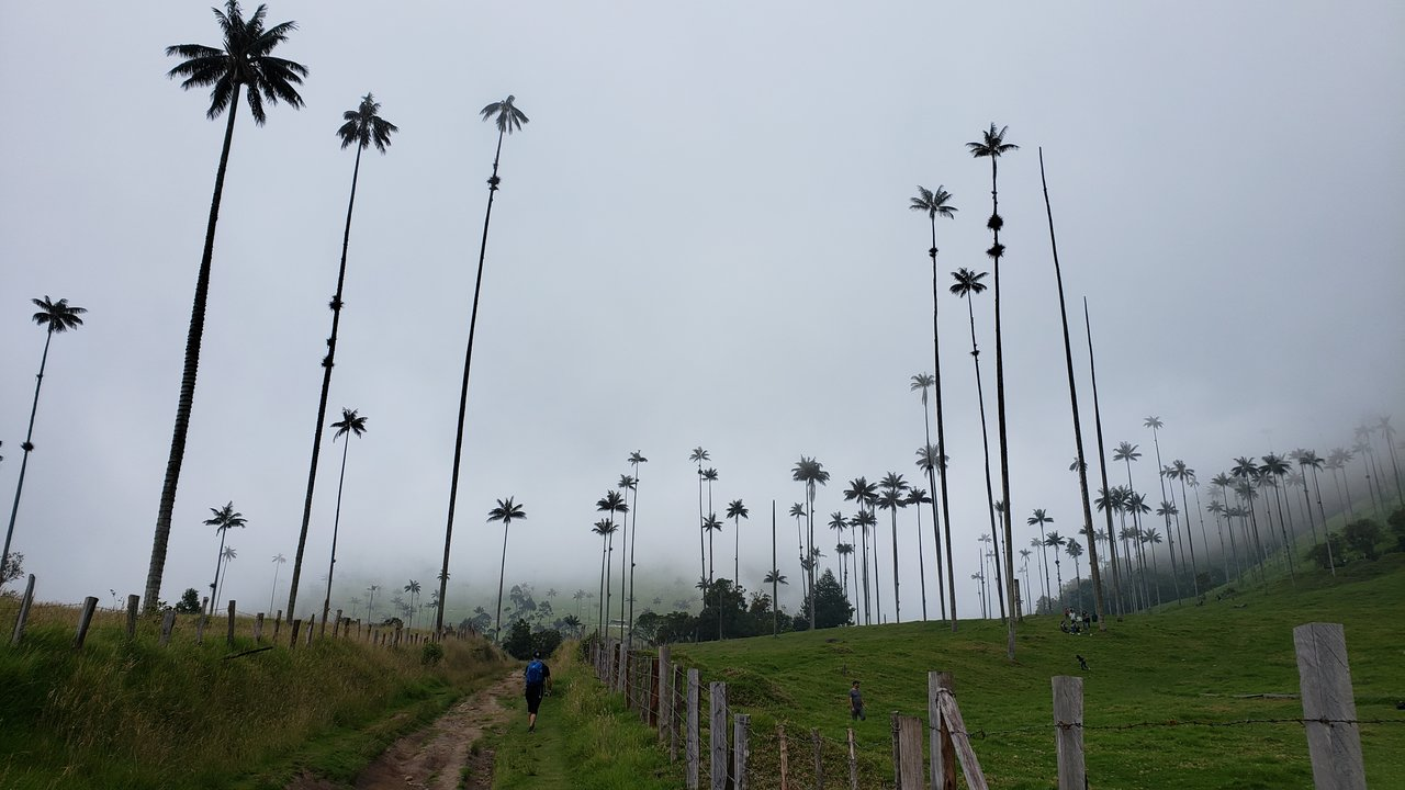 Valle de Cocora | Photo taken by Rebecca H