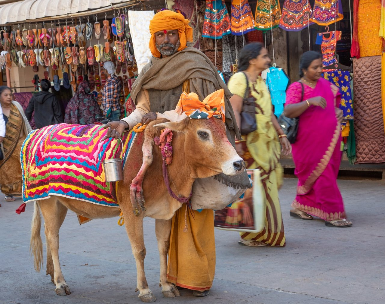 A holy man with a 5 legged sacred cow in the holy city of Pushkar. This genetic anomaly of birth makes this cow even more sacred and the sadhu profits from it.  | Photo taken by Jean M