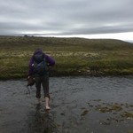 wading through an icy stream in the Hornstrandir Nature Reserve | Photo taken by Sarah C