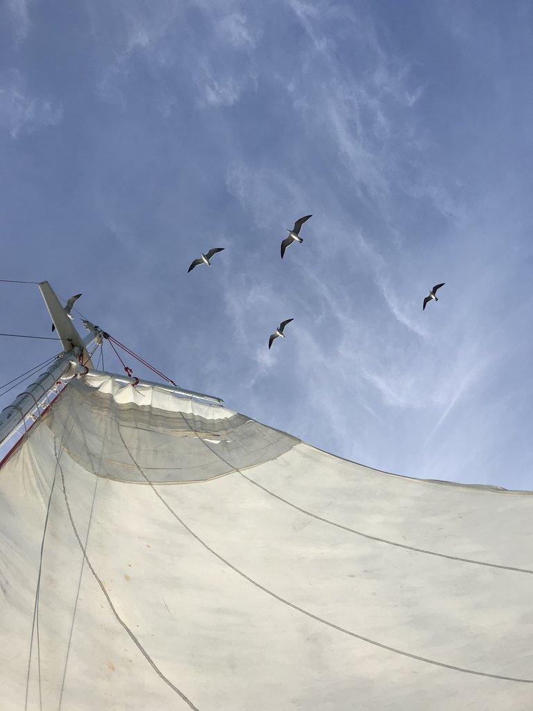 On Raggamuffin's sailboat | Photo taken by BRAD K