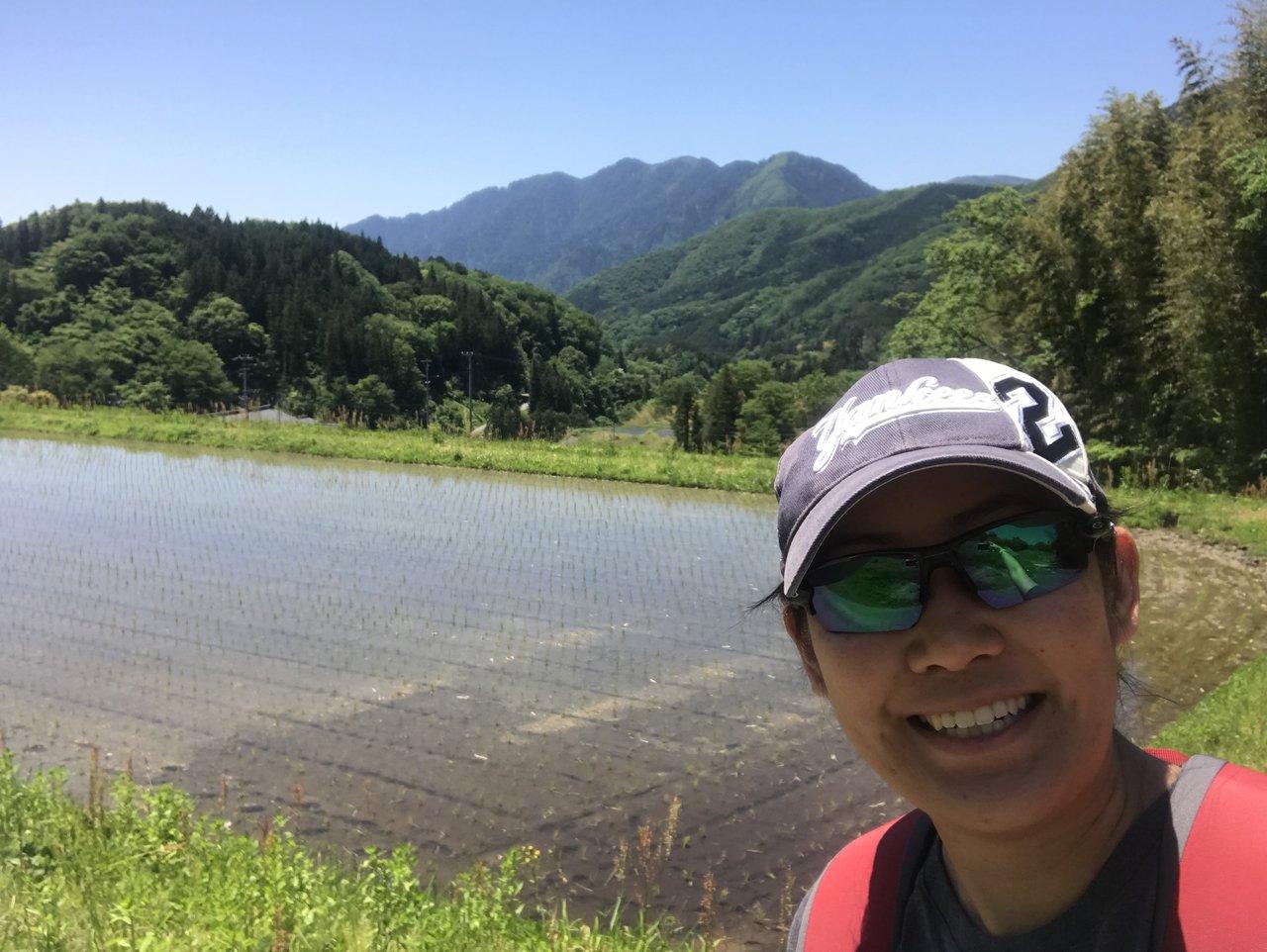 Rice fields | Photo taken by Pui san C