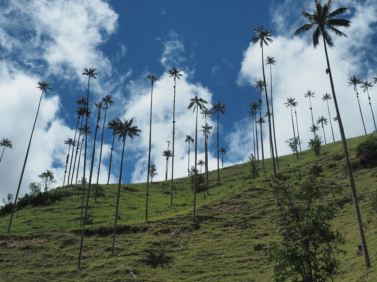 Valle de Cocora | Photo taken by Peter G