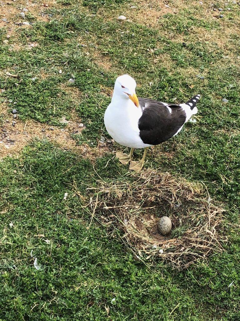 Mrs. Seagull | Photo taken by Melody B
