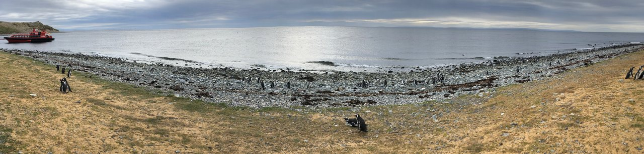Beach of Penguins | Photo taken by Melody B