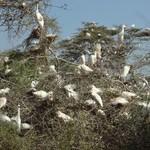 Egret nesting tree | Photo taken by Bev D