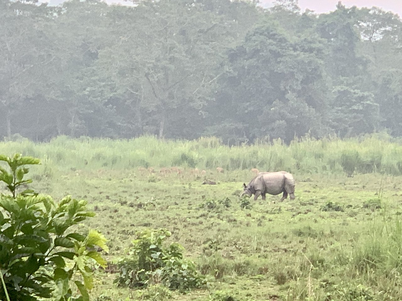 a one-horned rhino and a group of spotted deer   Photo taken by Caroline R