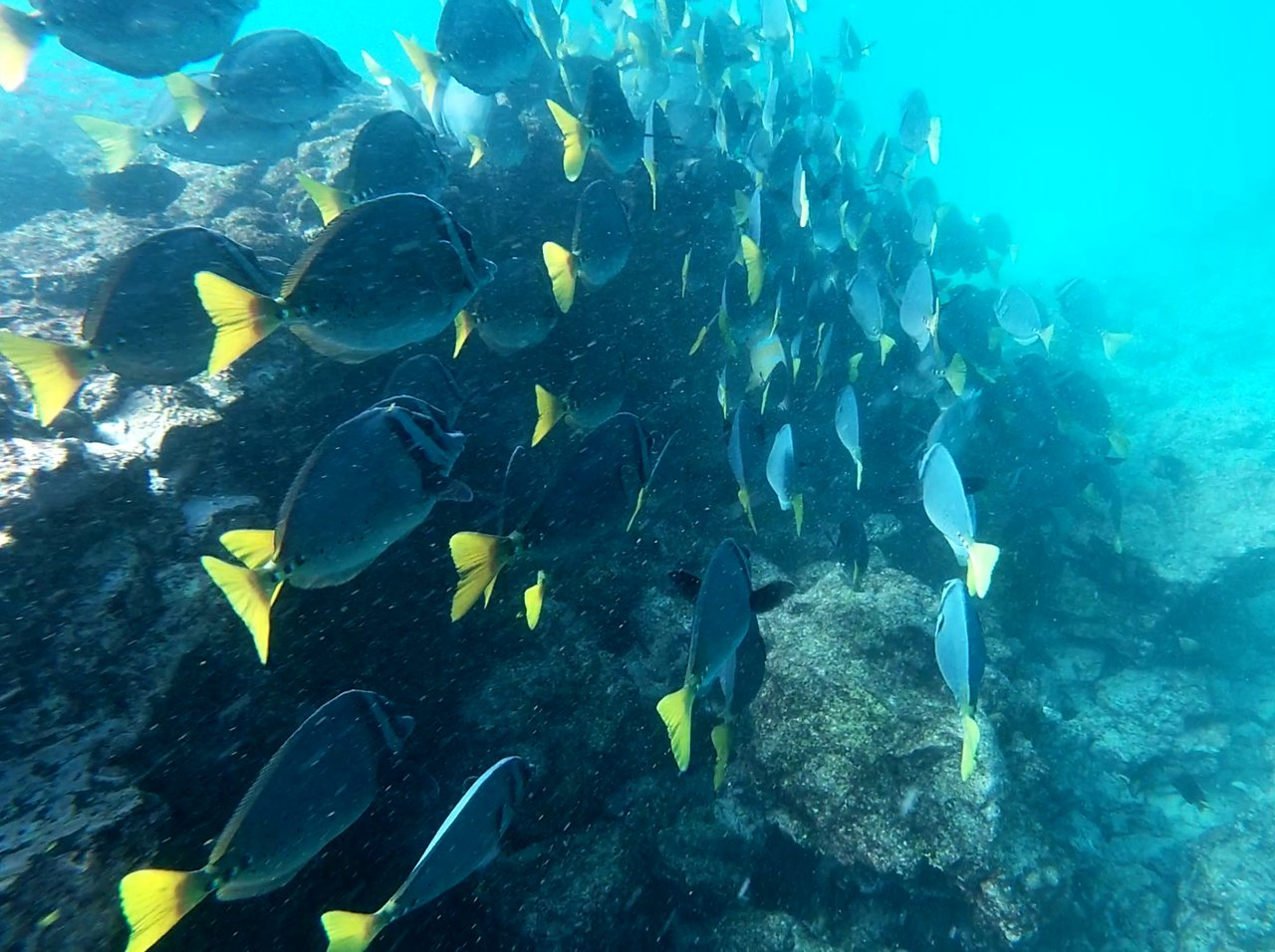 Just one of the countless schools of fish we were able to swim with | Photo taken by Peter S