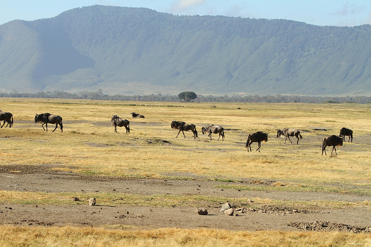 The walls of Ngorogoro crater | Photo taken by Jonathan G