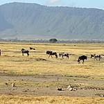 The walls of Ngorogoro crater | Photo taken by Jonathan G
