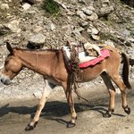 Manaslu mule | Photo taken by Scott Brennan