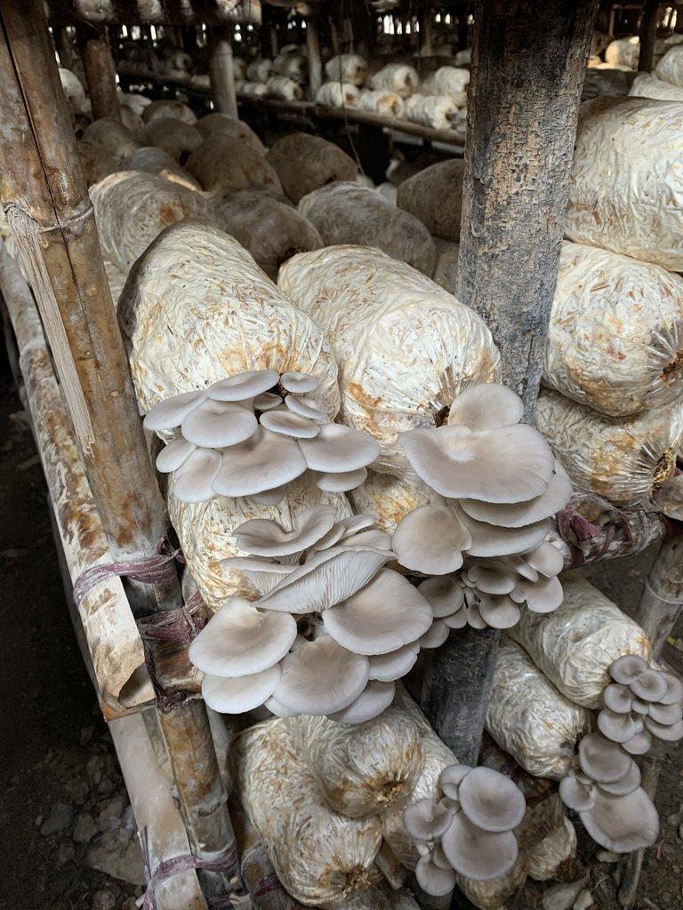 Visiting a mushroom farm | Photo taken by Bonnie S
