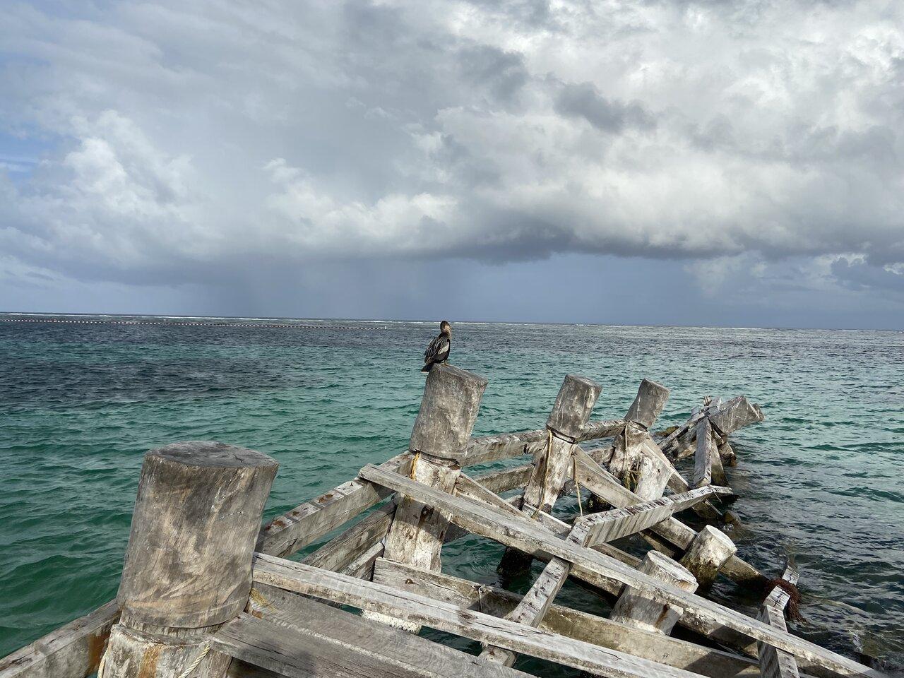 Pier at Puerto Morelos   Photo taken by Jazmin D