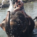 Chitwan elephant bathing | Photo taken by Kaniez C