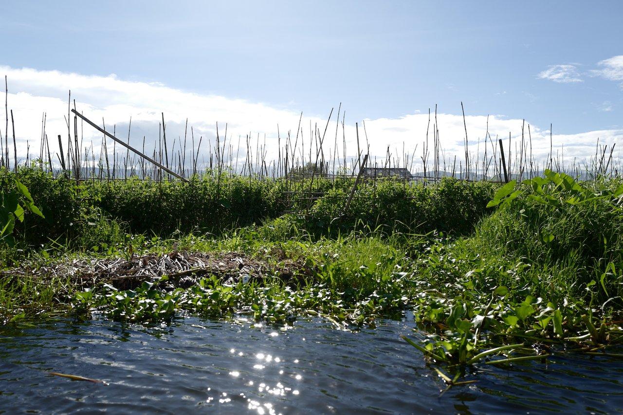 Floating garden in Inle Lake | Photo taken by Su-Lin T