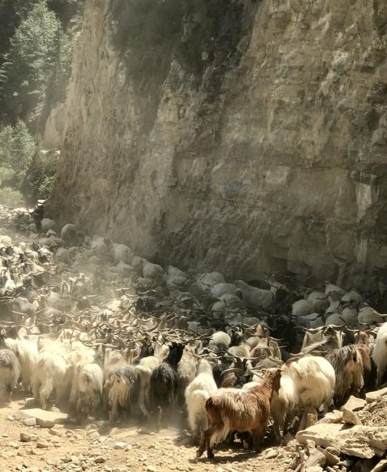 Animal traffic jam | Photo taken by Lisa D