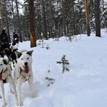 Dog sledding | Photo taken by Cyndi P