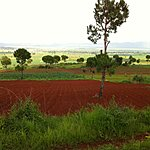 Rich, red soil | Photo taken by Rodney S
