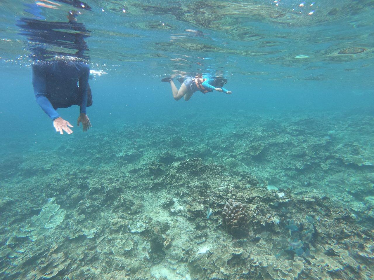Among the Corals | Photo taken by Debajyoti R