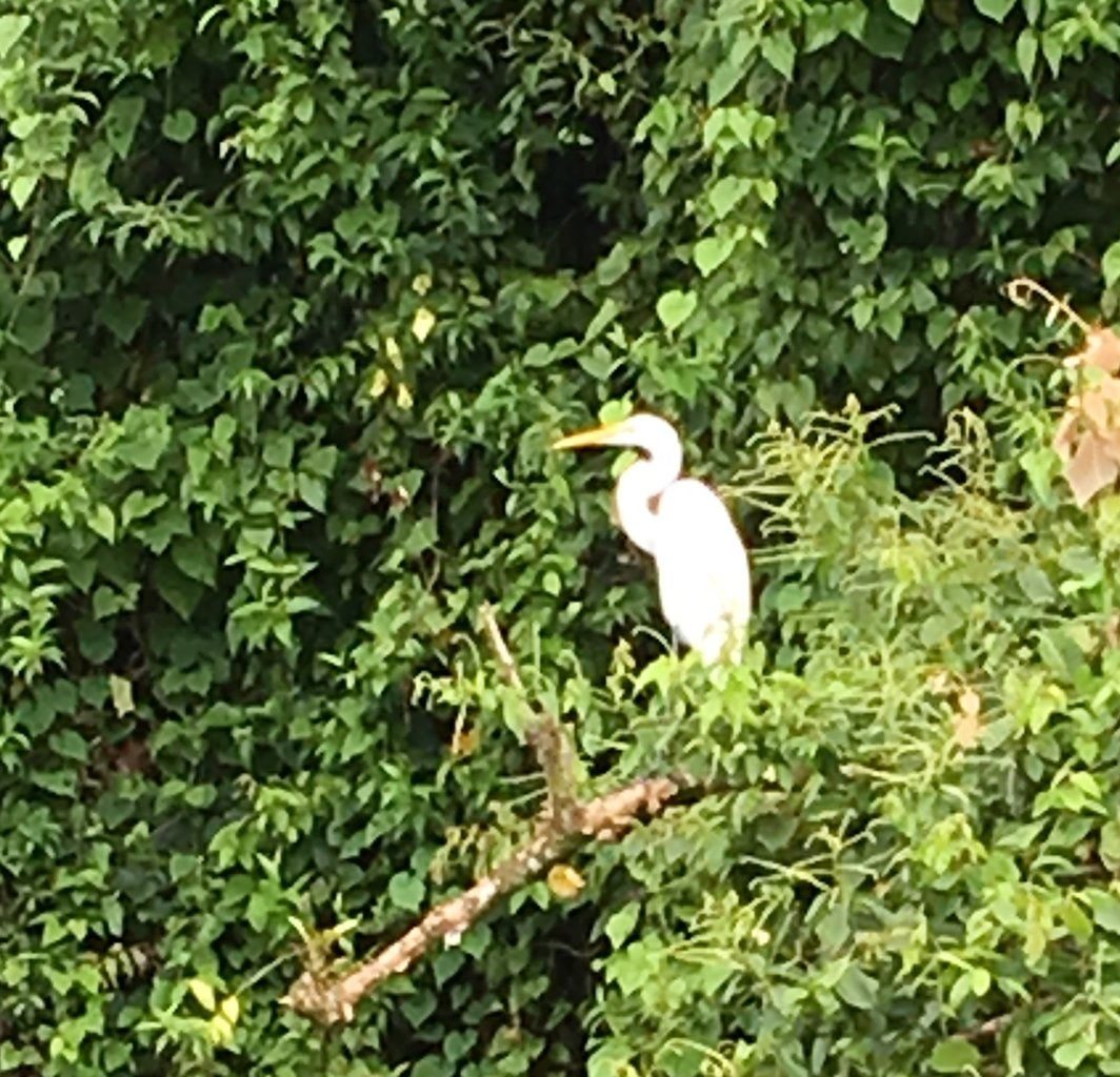 Egret on the Lake Crossing from Monteverde to Arenal | Photo taken by Rachel H