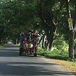Local transport | Photo taken by Rodney S