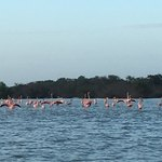 Colony of flamingos! | Photo taken by Kendal J