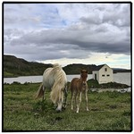Horses near Gistihusid Eglisstodum | Photo taken by Gail D
