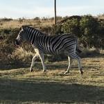 Gondwana Game Reserve   Photo taken by Missy G