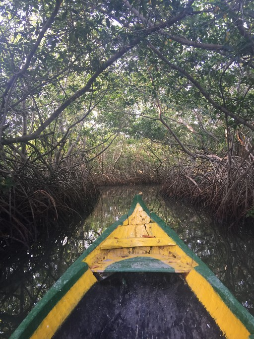 La Boquilla mangrove tour | Photo taken by Ella W