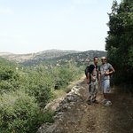 The beginning of a 6 hour 24 km hike in the Ajloun region - olives everywhere!! | Photo taken by fern k