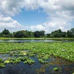 Lagoon, near Sigiriya   Photo taken by Andrew H