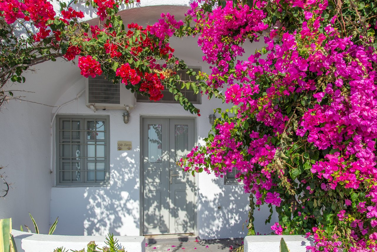Imerovigli  doorway dominated by red bougainvillea | Photo taken by David B