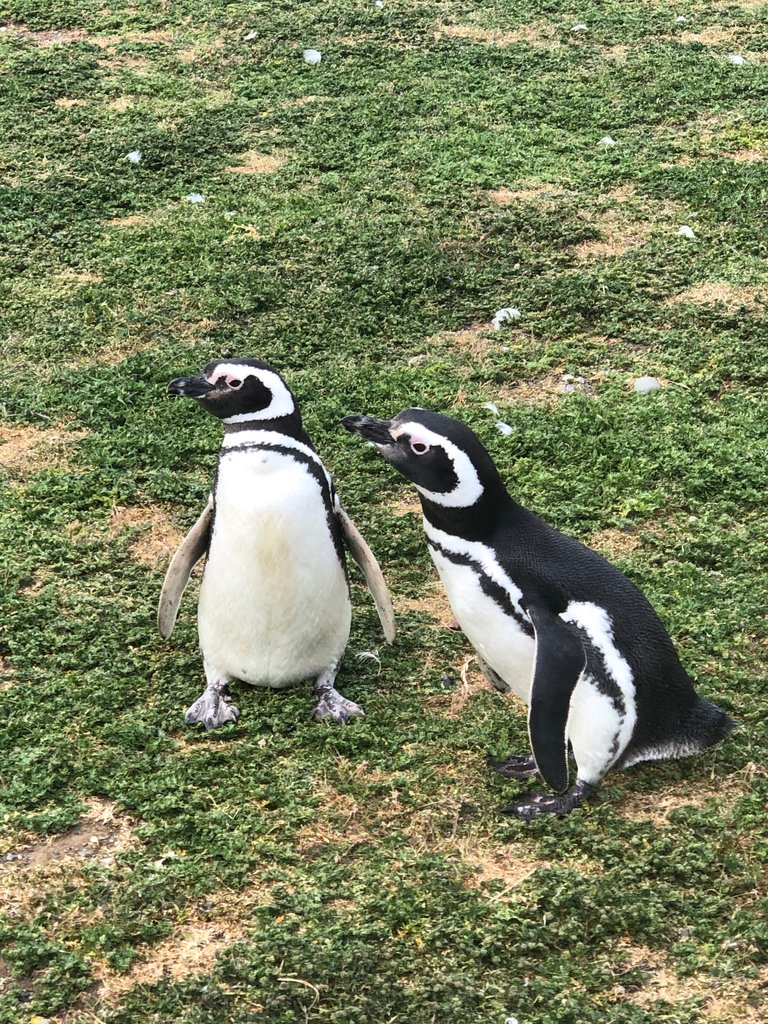 The Penguins | Photo taken by Melody B