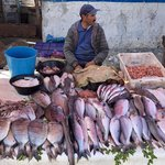 Fish market  | Photo taken by Alta P