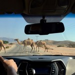 Camel crossing on the road to Petra | Photo taken by Valerie M