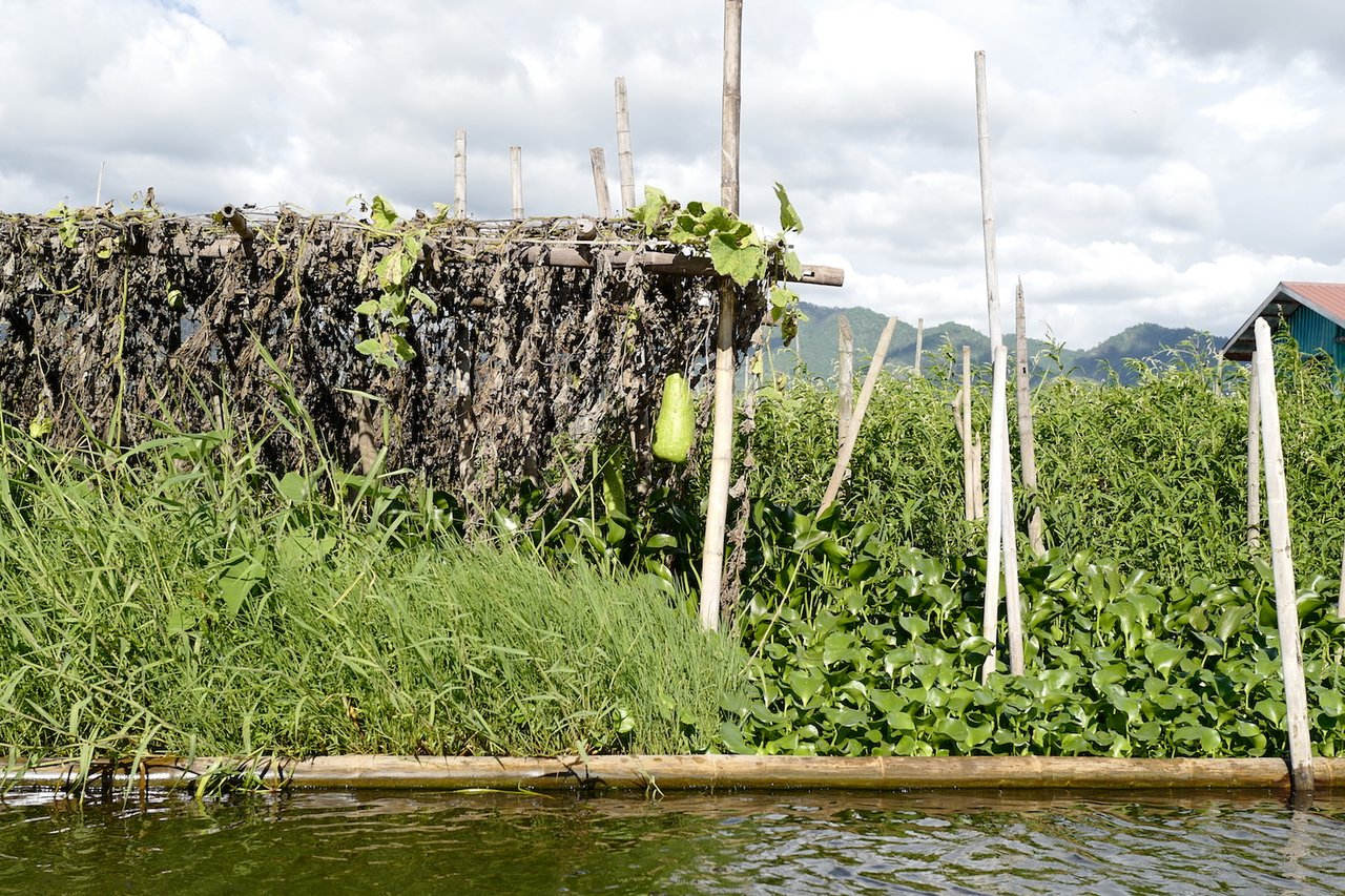 Floating garden in Inle Lake | Photo taken by Su-Lin T