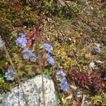 Mountain flowers    Photo taken by Grethe Maagaard H
