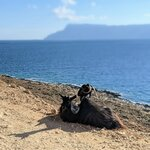 Even the goats can't get enough of the view | Photo taken by Jason C