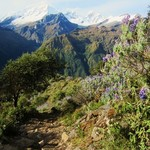 Alpine Lupine Forrest   | Photo taken by Jennifer S