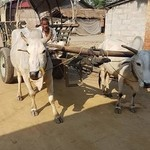 Ox cart | Photo taken by Kim S
