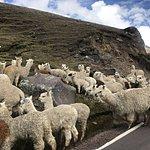 Peruvian traffic jam   Photo taken by Kristin T