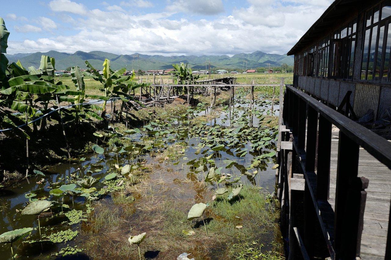 Lotus farm for fabric- lotus (fabric) weaving | Photo taken by Su-Lin T
