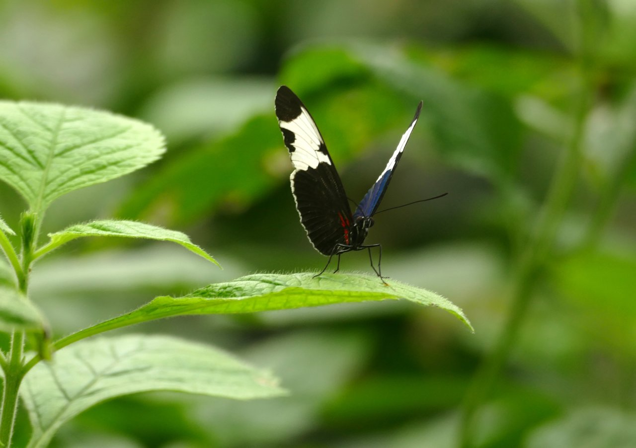 Selvatura Butterfly Garden | Photo taken by Laura M