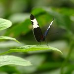 Selvatura Butterfly Garden | Photo taken by Laura M