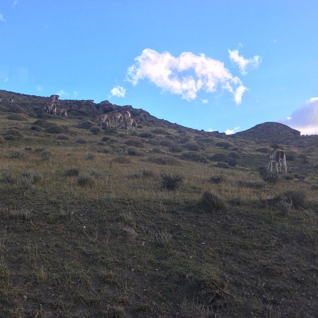 Wild llamas | Photo taken by Beth S