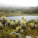 Low lying fog over an Andean lagoon